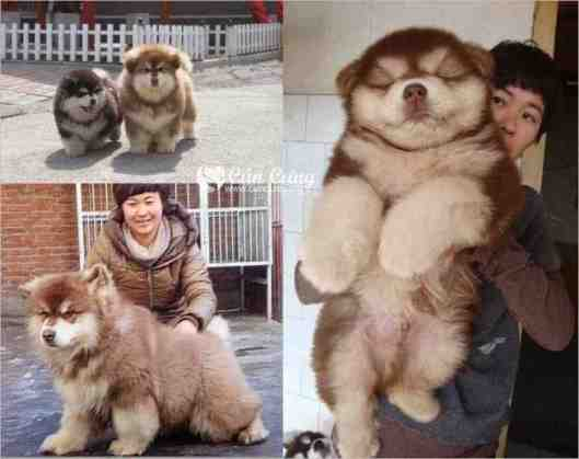 Trendy New Mixed Breed Dogs