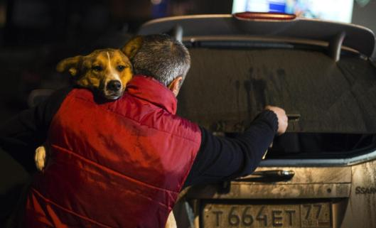 Volunteers Smuggle Stray Dogs Out of Sochi