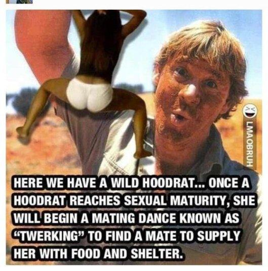 Crikey, a Hoodrat!
