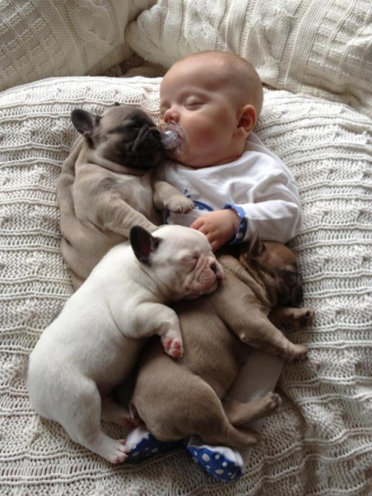French Bulldogs & Babies